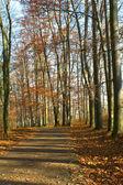 ścieżka w lesie jesienią — Zdjęcie stockowe