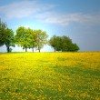 The group of trees and dandelion meadow - Stock Photo