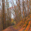 Path in a beech forest at sunset - Stock Photo