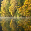 Stock Photo: Forest lake in the autumn morning. Vertically.