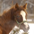 Horse in winter day — Stock Photo