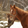 Two horses in winter day — Stock Photo