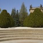 Conifers in Prague Castle Garden — Stock Photo #9680111