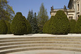 Conifers in Prague Castle Garden — Stock Photo