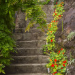 Old stone stairs in the garden — Stock Photo #9733259