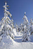 Snow covered mountain and trees with blue sky in the background — Stock Photo
