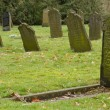 Stock Photo: Old tombstones on grave