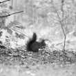A squirrel is eating - Photo