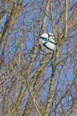 Einen fußball in einem baum — Stockfoto