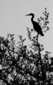 A heron in a tree — Stock Photo