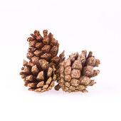 A few pine cones — Stock Photo