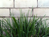 Grass against a brick wall — Stock Photo