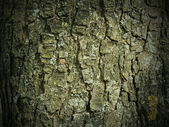 The texture of tree bark — Stock Photo