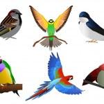 Colourful birds — Stock Vector #9372934