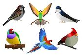 Colourful birds — Stock Vector