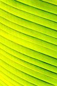 Zelené pruhy — Stock fotografie