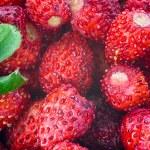 Wild strawberries close-up photo — Stock Photo