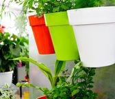 Modern garden — Stock Photo