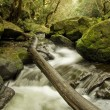 Fallen Tree over Secluded Stream — Stock Photo #9383405