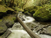 Fallen Tree over Secluded Stream — Stock Photo