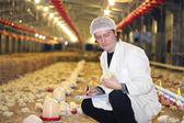 Vet working on chicken farm — Stock Photo