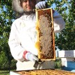 Royalty-Free Stock Photo: Beekeeper in action