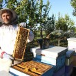 Beekeeper in action — Stock Photo