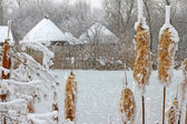 Frozen reeds and grass near the lake — Stock Photo