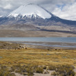 Royalty-Free Stock Photo: Chungará Lake and Parinacota volcano