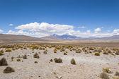 Parinacota 和 pomerape 火山 — 图库照片