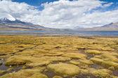 Parinacota volcano — Stock Photo