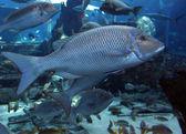 Big Fish — Stock Photo