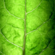 Stock Photo: Tree Leaf