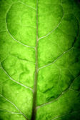 Tree Leaf — Stock Photo