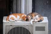 Two Cats Sleeping Outdoors — Stock Photo