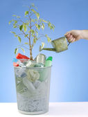 Eco plant — Stock Photo