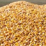 Pile of corn — Stock Photo #10068246