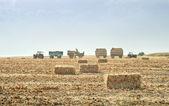 Straw bales in autumn — Foto Stock
