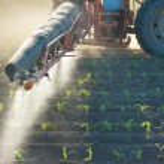 Tractor fertilizes crops corn — Stock Photo #10554509