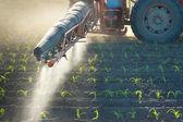 Ciągnik zapładnia upraw kukurydzy — Zdjęcie stockowe