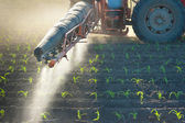 Tractor fertilizes crops corn — ストック写真