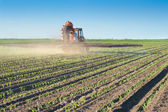 Tractor fertilizes crops corn — Stock fotografie