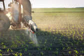 Tractor fertilizes crops corn — 图库照片