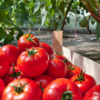 Ripe tomatoes — Stock Photo #9450347
