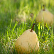 Pears lie on grass — Stock Photo #9514009