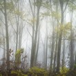 Forest in fog — Stock Photo #9516827