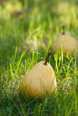 Pears lie on the grass — Stock Photo