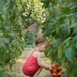 Stock Photo: Girls picked tomatoes