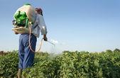 Man spraying vegetables in the garden — Stock Photo