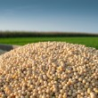 Soybean Harvest - Stock Photo